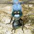 Odonata of Ukraine icon