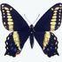 Utah Butterflies icon