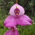 Terrestrial Orchids of the Garden Route icon