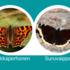 Herukkaperhosen ja suruvaipan etsintäkuulutus Stadissa icon