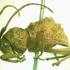 Insectos de Nicaragua icon
