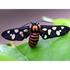 Moths of Gujarat icon