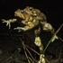 Amphibians and Reptiles of the JMU Arboretum icon