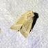 Masion sur la Zone Humide Moth Sheet, September 11, 2021 icon
