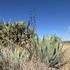 Unidad de Aprovechamiento y Conservación Rancho el Ojo icon