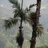 Biodiversidad de la Reserva Natural La Esperanza icon
