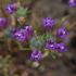 Flora y Fauna de las Charcas Vernales de Baja California icon