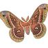 Moths of California icon