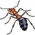 Ants of California icon