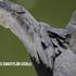 Guía de Aves Cuautitlán Izcalli Estado de México icon