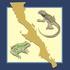 Herpetofauna de Baja California icon