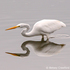 Corte Madera Marsh Ecological Preserve icon