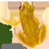 Global Amphibian BioBlitz icon