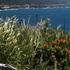 Snapshot Cal Coast 2017 - Salt Point Bioblitz icon