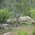 Turahalli forest biodiversity icon