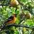 Aves de Tuxpan icon