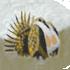 Sagehen Creek Basin Biodiversity icon