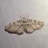 Fundy Moths- Papillons de nuit de Fundy icon
