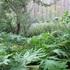 Edible Wild Plants of Nova Scotia icon