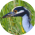 Fauna del Guayas icon