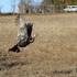 Peterborough Wild Turkey Count icon