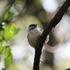Kitchener-Waterloo Birding icon