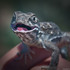 Morley Nelson BOP NCA Amphibians and Reptiles icon