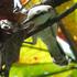 Aves del Municipio de Villavicencio icon
