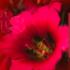 redlist (s Afr) icon