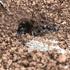 Ants of Rome icon