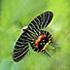 Butterflies of Bhutan icon