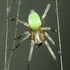 Botswana Spiders & relatives s Afr icon