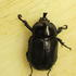 Botswana Beetles s Afr icon