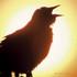 Montezuma Audubon Center, NY icon
