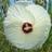 1631 icon thumb