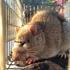 Haida Gwaii Rat Collection icon