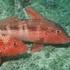 Cape Rodney - Okakari Pt Marine Reserve icon