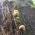 Fungi of the PNW icon
