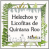 Helechos y Licofitas de Quintana Roo, México icon