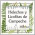 Helechos y Licofitas de Campeche, México icon