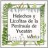 Helechos y Licofitas de Yucatán, México icon