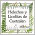Helechos y Licofitas de Cuetzalan, Puebla, México icon