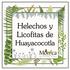 Helechos y Licofitas de Huayacocotla, Veracruz, México icon