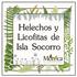 Helechos y Licofitas de Isla Socorro, Colima, México icon