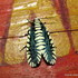 Moths of Bhutan icon