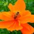 Bees in Malaysia / Lebah-lebah di Malaysia icon