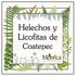 Helechos y Licofitas de Coatepec, Veracruz, México icon