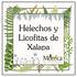 Helechos y Licofitas de Xalapa, Veracruz, México icon