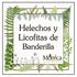 Helechos y Licofitas de Banderilla, Veracruz, México icon