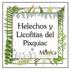 Helechos y Licofitas del Pixquiac, Veracruz, México icon